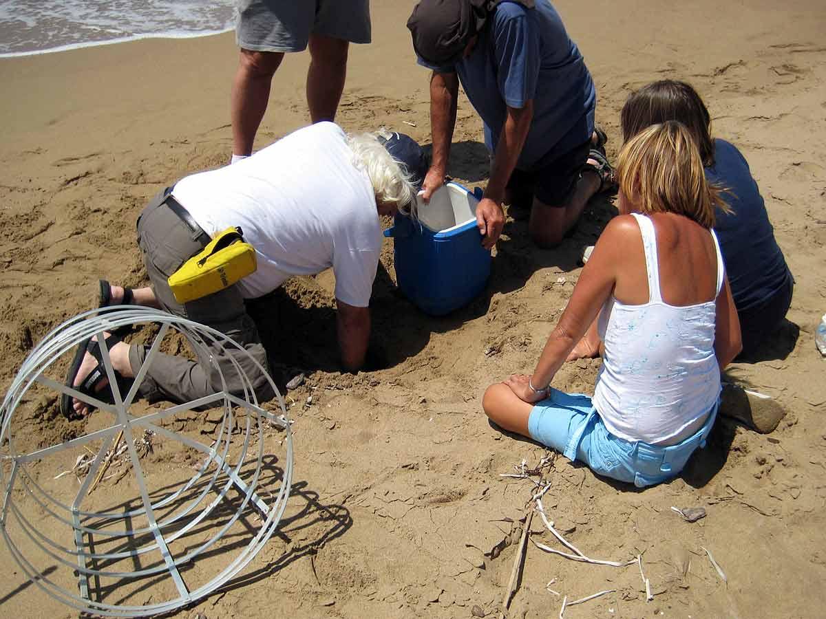 Lara-Bay-conservation-station-turtle-nest
