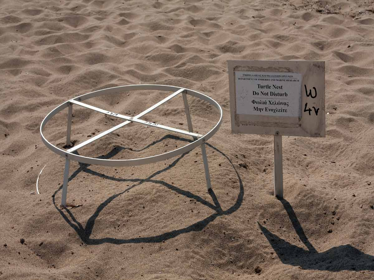 Lara-Bay-protected-turtle-nest