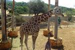 Paphos Zoo Pegeia
